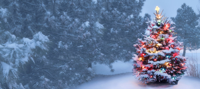 This decorated outdoor snow covered Christmas Tree glows brightly on this foggy Christmas morning.